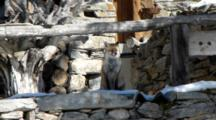 Red Fox Front Of A Chalet