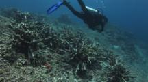 Artificial Reef In Bunaken Marine Park