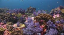 Travel Across Coral Reef