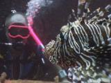 Scuba Diver Watches Pair Of Red Lionfish (Pterois Volitans) Or Devil Firefish (Pterois Miles)