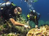 Scuba Divers Watch Hairy Red Hermit Crab, Dardanus Lagopodes