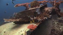 Hard Corals Colonize The Funnel Of The Wreck Of Nasi Yalodina In Fiji