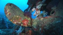 Soft Corals And Gorgonian Sea Fans Colonize The Funnel And Rudder Of The Wreck Of The Nasi Yalodina In Fiji