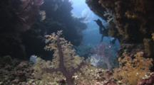 Dendronephthya Soft Coral And Scuba Divers In Swimthrough At E6, Fiji