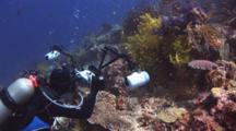 Underwater Photographer Photographs Chironephthya Soft Coral