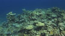Coral Reef With Many Acropora Hard Corals
