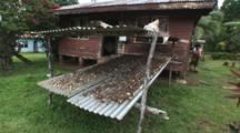 Kava Root Drying On Corrugated Steel At Raviravi Village In Fiji