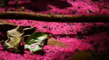 Brilliant Carpet Of Fuchsia Pink Flower Petals On Forest Floor