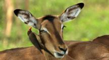 Ultra HD Animals Mating