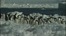 Anarctica Penguins On Ice Floe