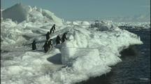 Antarctica Penguins On Ice Cliff