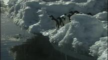 Antarctica Penguins On Ice Cliff, All Jump In
