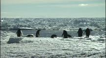 Antarctica Penguins On Ice Near Water's Edge