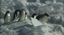 Antarctica Penguins On Ice
