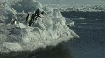 Antarctica Penguins On Ice Cliff, Jump Into Water