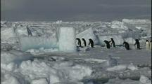 Antarctica Penguins On Pack Ice