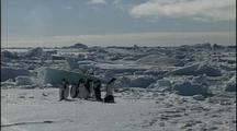 Antarctica Penguins On Pack Ice, Orcas In Water In Background
