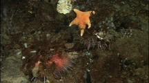 Antarctic Invertebrates On Bottom