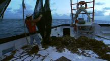 Unloading Shrimp From Net On A Trawler
