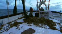 Unloading Shrimp From Net On A Trawler
