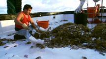 Sorting The Catch On Shrimp Trawler