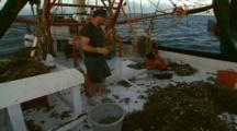 Sorting The Catch On Shrimp Trawler