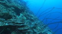 Travel Over Sloping Coral Reef