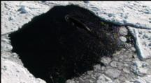 Minke Whale Surfaces In Small Hole In Ice