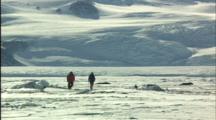 People Walk Toward Seals Sleeping On Ice
