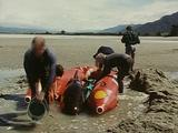 Volunteers Tend To Stranded Short Finned Pilot Whale Held Between Inflatable Dinghy