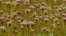 Wildflowers Blooming In Patagonian Meadow