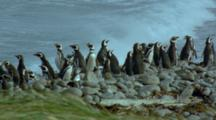 Penguin Film Stock Footage