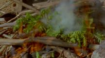 Green Ferns On Campfire Making Smoke