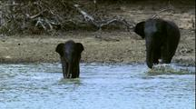 Asian Elephant Herd At Water Hole