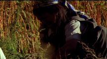 Nepalese Woman Picking Buckwheat