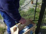 Black Stilt (Himanoptus Novaezelandiae) Breeding Programme Release
