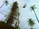 Man Falls From Tall Tower To Ground, Bounces Once And Gets Up. Land Diving, Nagol Festival, To Celebrate Yam Harvest. People Diving Off Tall Tower With Vines Tied To Their Ankles. (Was The Inspiration Of Western Bungy Jumping)