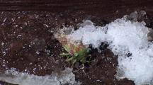 Time Lapse Shield Bug Thawing After Frozen Hibernation