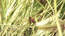 2 Pairs Of Dragonflies Mating
