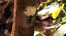 Yellow And Black Poison Arrow Frog On Tree Trunk