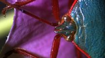 Head Of Shieldbug On Pink Flower