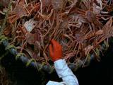 Ms Slomo, Men In Hold Loading Crabs Into Basket