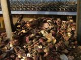 Mcu Oysters Pouring Out Of Dredge Opening, Z/I And Z/O Slightly