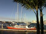 Yachts Moored On Jetty, Port Lincoln, Palm Trees Blowing In Wind F/G