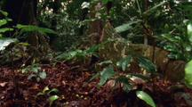 Large Tree Root Snakes Along Forest Floor Amongst Lush Foliage