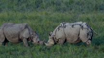Two Indian Rhinos Butt Heads, Then Back Away