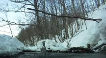 Kingfisher Dives Into Water Between Snowy Banks And Leafless Trees