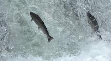 Pair Of Salmon Leaping Up Waterfall