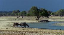 Two Water Buffalo Approach Shrinking River