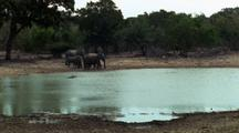 Xws Elephants Hestitate At Carcass In Waterhole